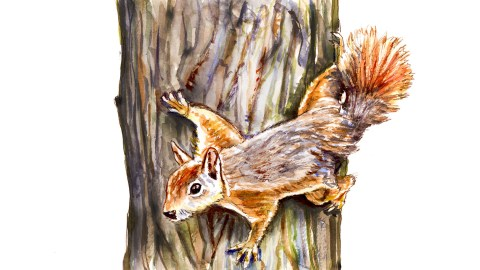 #WorldWatercolorGroup - Day 21 - Getting A Bit Squirrelly - Squirrel In Tree - Doodlewash