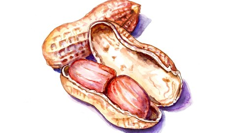 #WorldWatercolorGroup - Day 26 - Peanuts In The Shell - Doodlewash