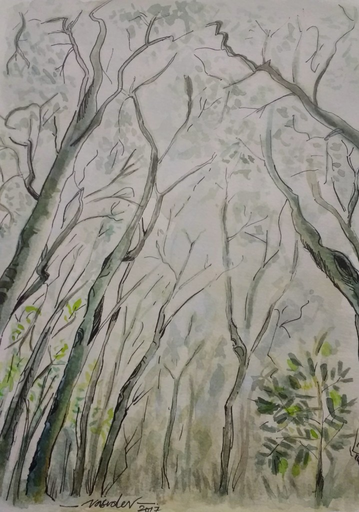 There was something that drew me to paint this 'treescape'..A foggy sky with tall trees