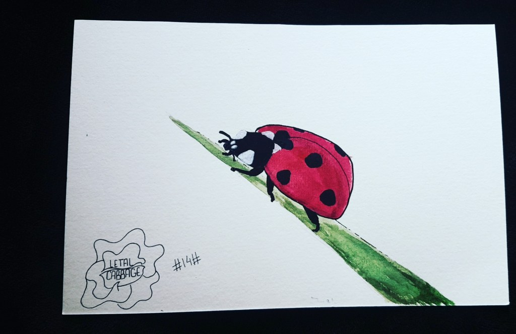 🐞 Ladybug 🐞| Fourteenth challenge! I want to catch up, I already make very simple dr