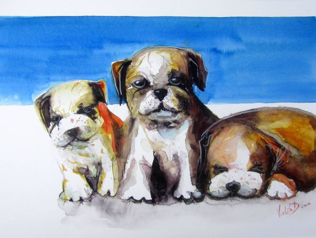 Don't Mess With Us, Mate! (English Bulldog Puppies), watercolour on Hahnemühle Britannia 300