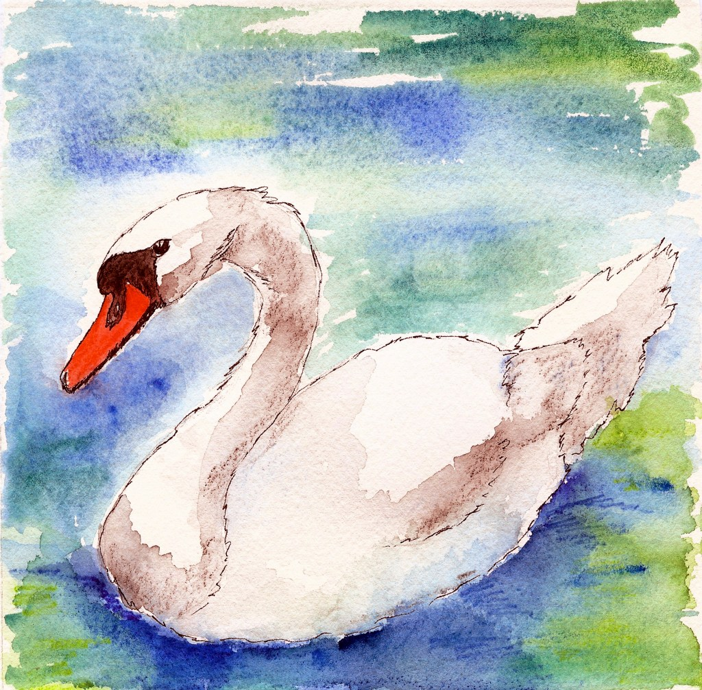 Swan Swan Watercolor
