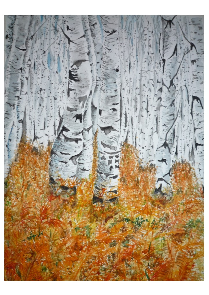 Inspired by the contrast between the whitish background of the Aspen trees and the foreground of the