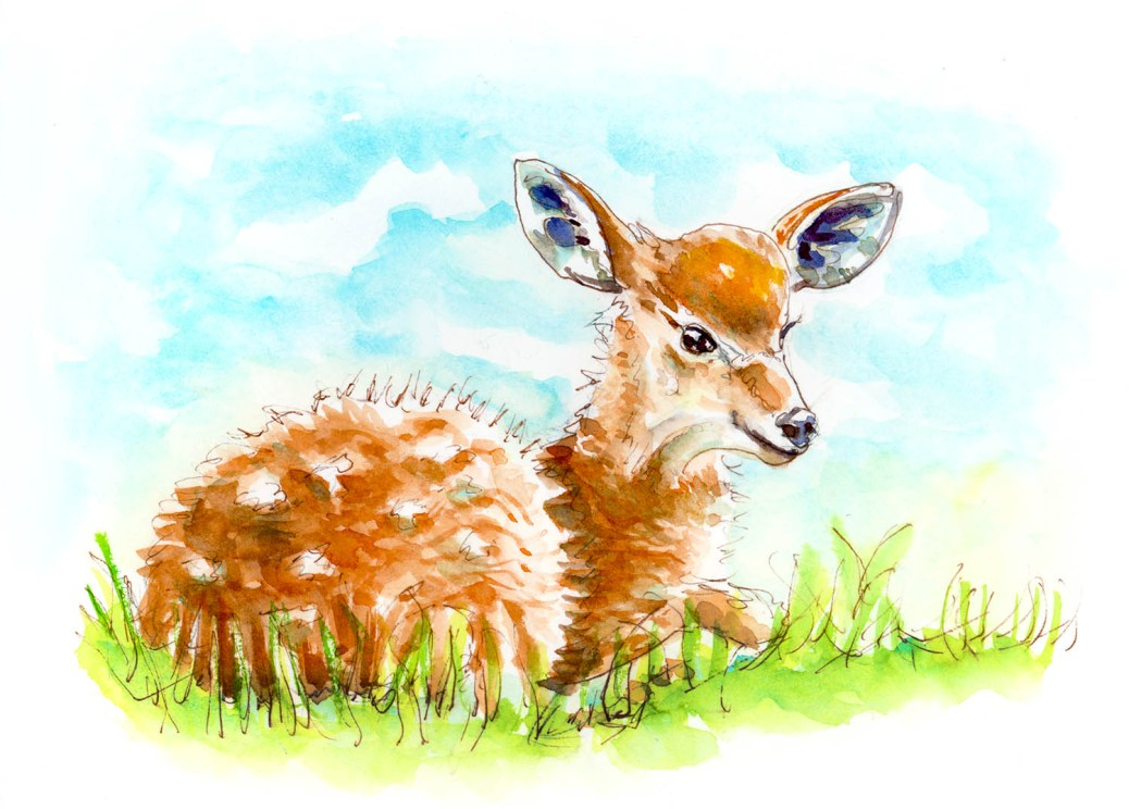 Baby Antelope Deer Watercolor - A Little Whimsy - Doodlewash