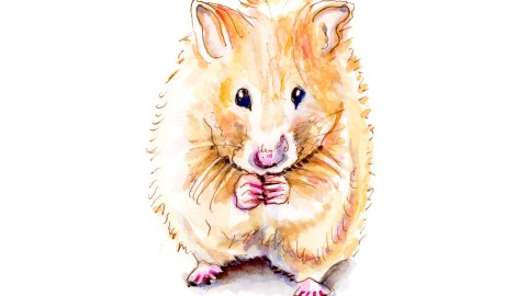 #WorldWatercolorGroup - Day 4 - Furry Little Things - Hamster Watercolor - Doodlewash