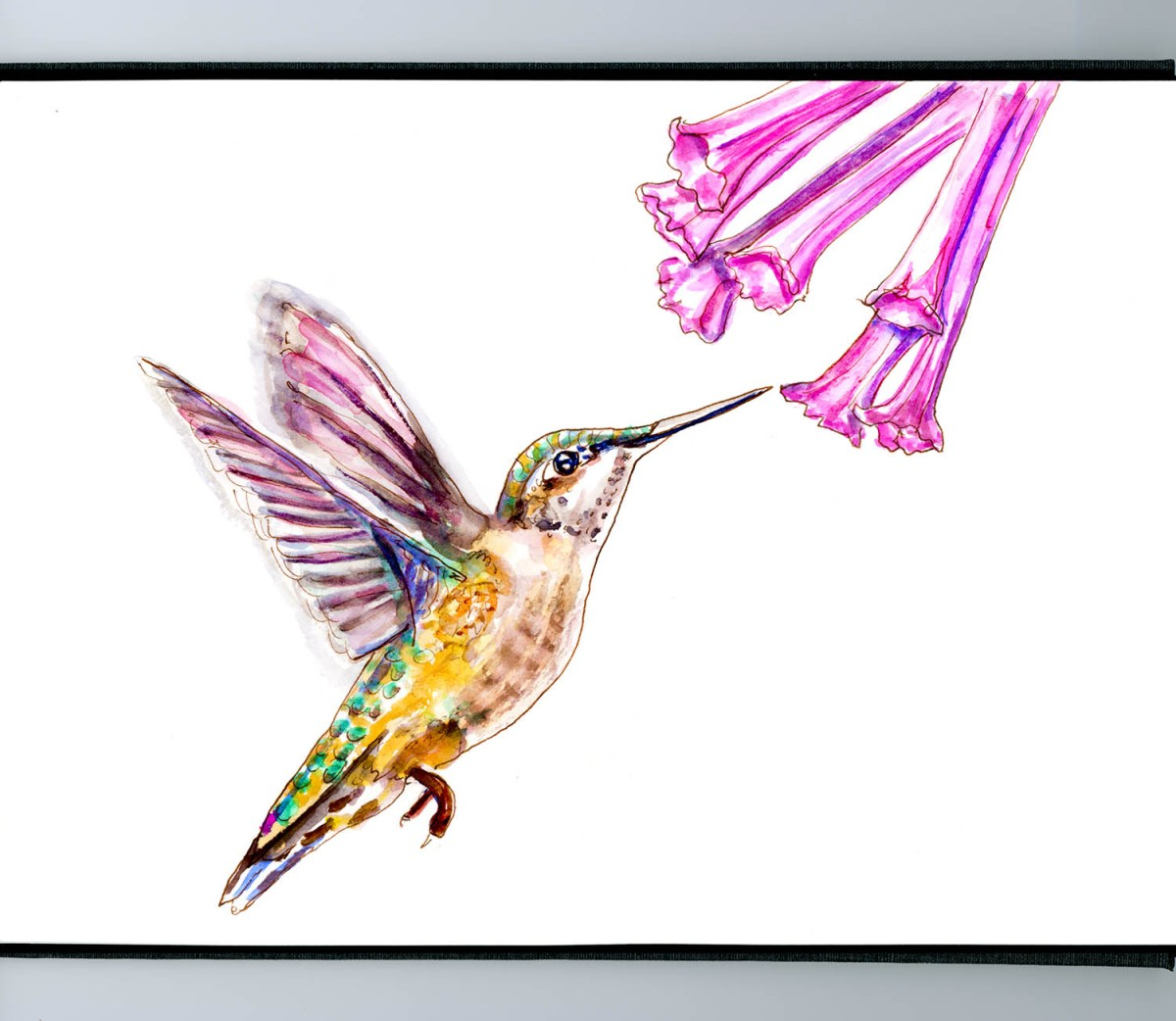 #WorldWatercolorGroup - Day 6 - Like A Hummingbird - Doodlewash