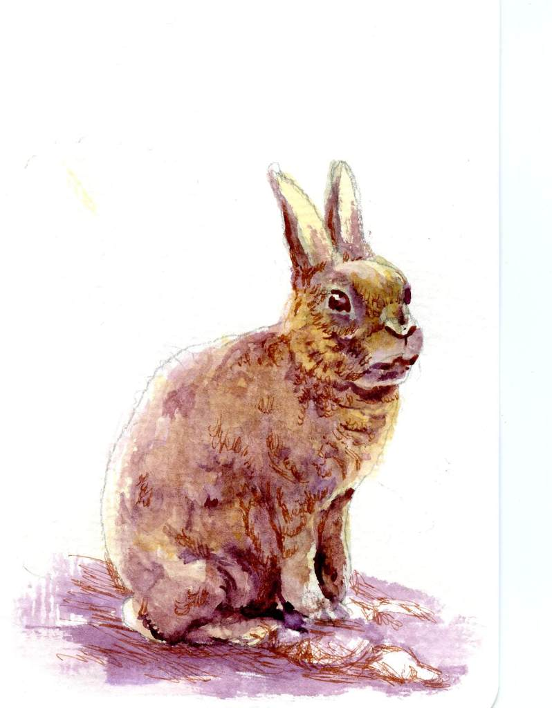 A rather rushed Rex rabbit. I've got toooo many artistic projects going on. Isn't that a