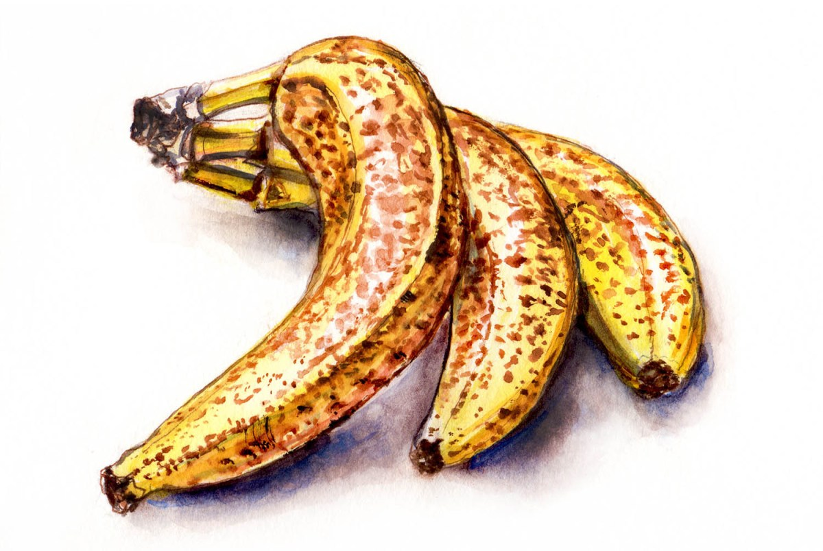 Watercolor Sketching - Ripe Bananas