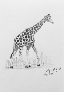 Day 34 Giraffe 20180326 Giraf dag 34