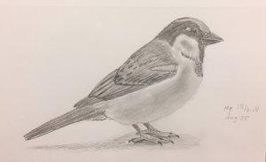 Day 35 Sparrow 20180328 Mus dag 35