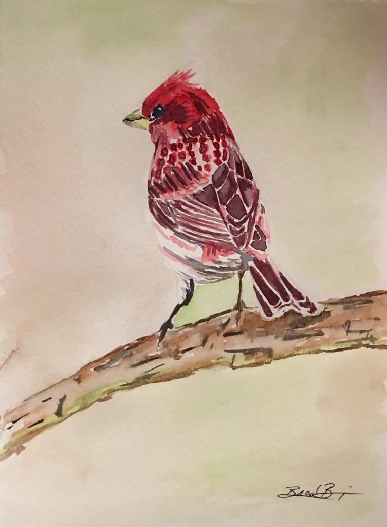 Purple Finch, the state bird of New Hampshire. 31B528C8-786F-4514-A0D1-5AAF50F61ED8