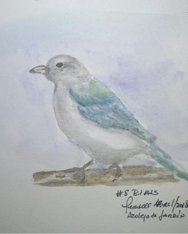 8. Birds. Blue grey Tanager 8 bird