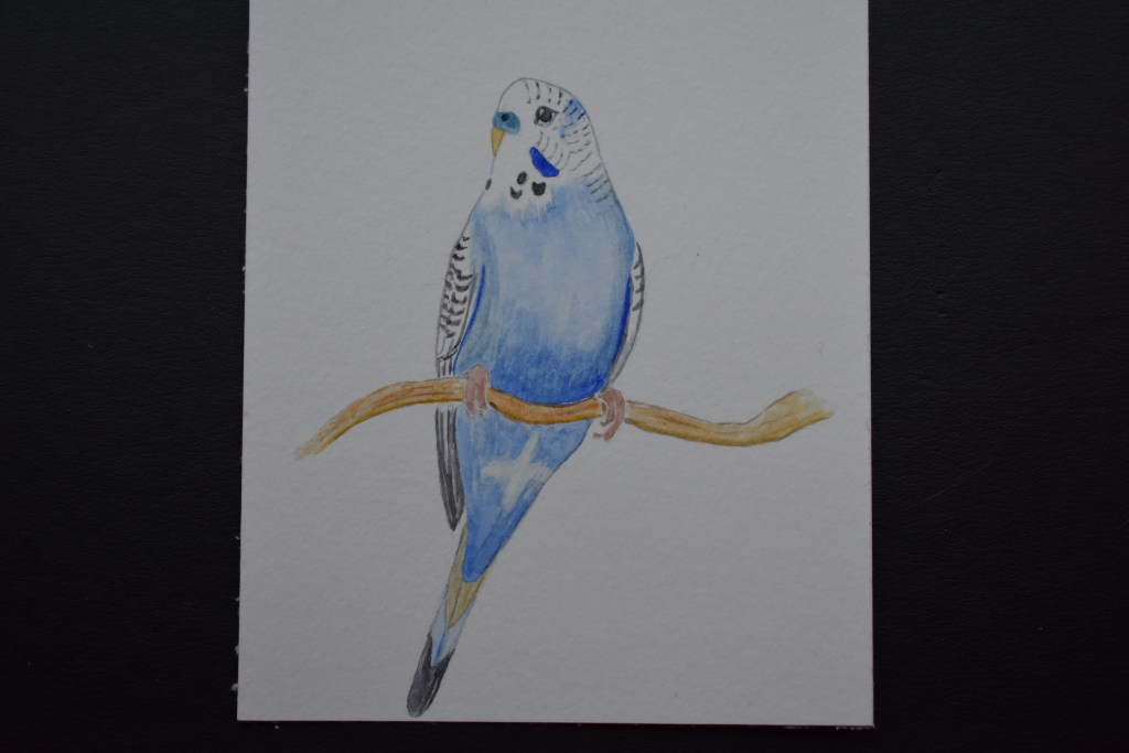 Apr 8, 2018 challenge birds. A bird from my childhood. My grandmother had a pet budgie who rode arou