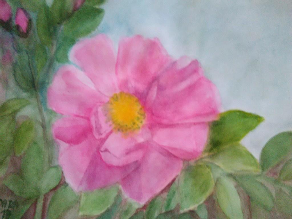 rose IMG_20180405_064500