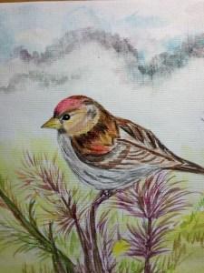 My bird paradise. As no idea about 8 April. So sending late. IMG_20180410_200342377