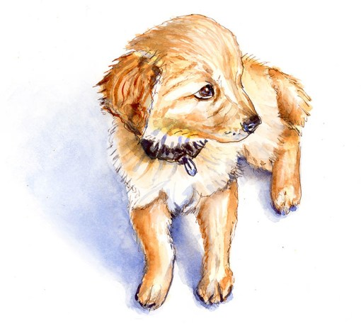 Cute Puppy Charlie's Shiny Da Vinci Trio ©Doodlewash