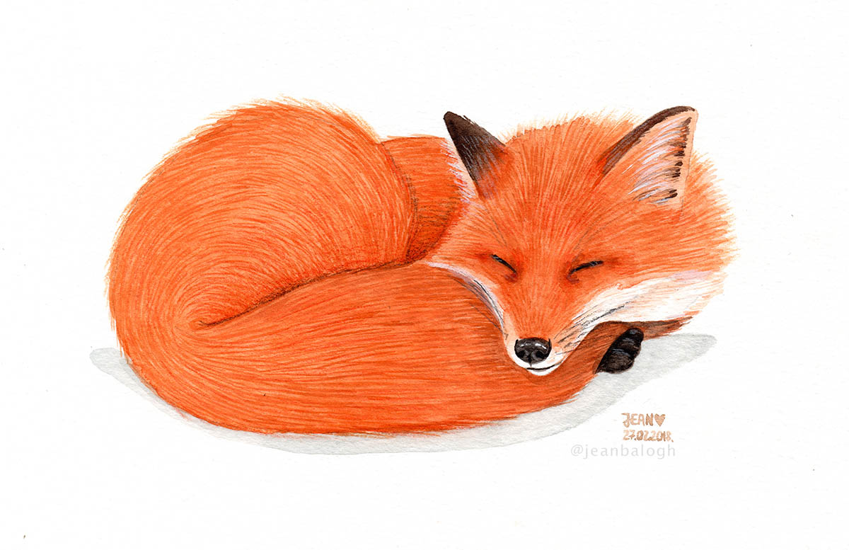 Sleeping Fox - Watercolor Illustration by Jean Balogh - Doodlewash