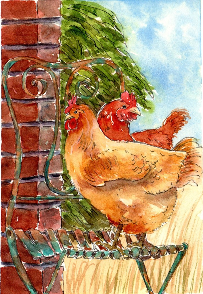 amaryllis001chickens-chair3001chickens-roost002Denver US002Hydrangea001Rose002ThePearl001Travis St h