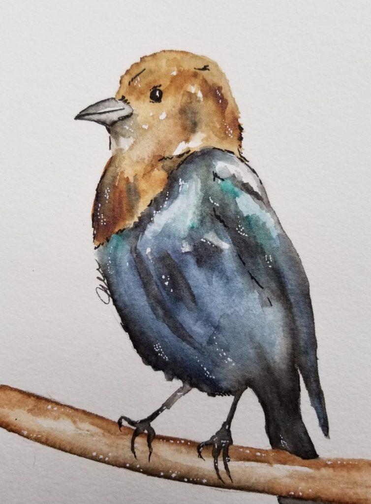 I tried keeping it loose. Texas brown-headed Cowbird. 20180508_184411