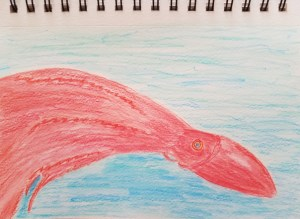 Blanket Octopus sketch