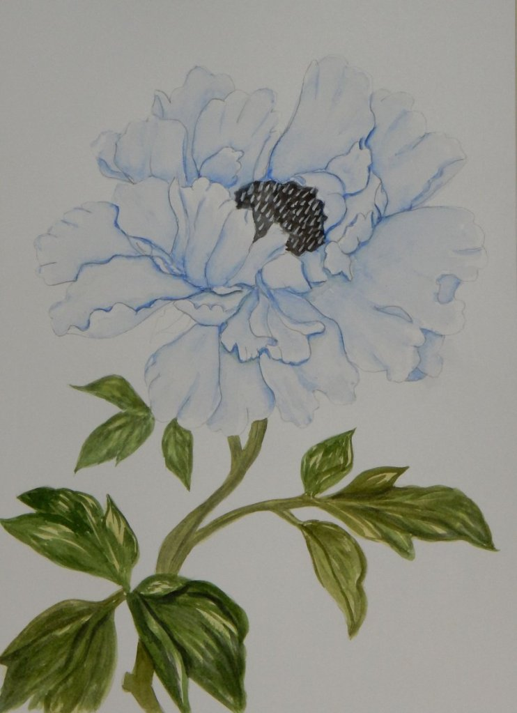 World Watercolor Group™ THE CHINESE BLUE PEONY have taken a tracing so I can paint it in the