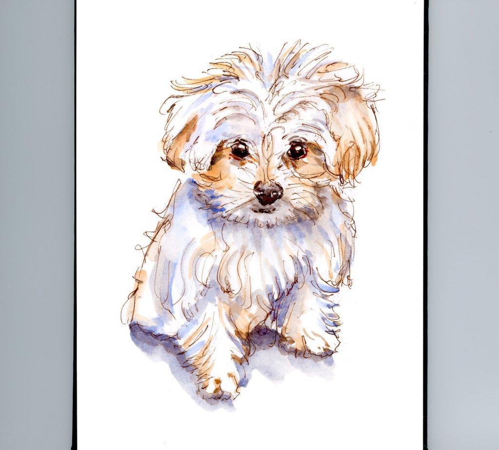 Day 19 - Pocket Dogs Maltese Watercolor - #doodlewashMay2018 Doodlewash