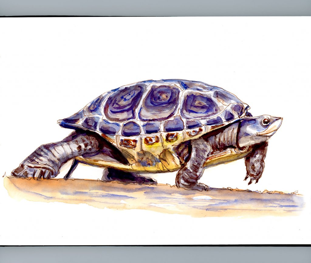 Day 23 - When The Tortoise Wins - #doodlewashMay2018 Doodlewash