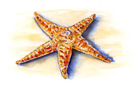 Day 4 - The Curious Life Of Sea Stars - #doodlewashMay2018 Doodlewash