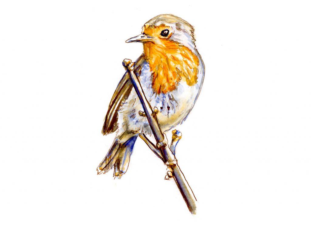 Day 8 - For The Birds - European Robin - #doodlewashMay2018 Doodlewash