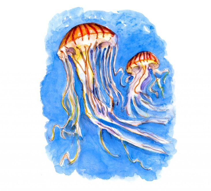 Day 9 - Battling With Jellyfish Watercolor_