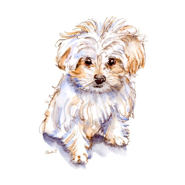 Tiny Little Dogs Maltese Watercolor Signed Print