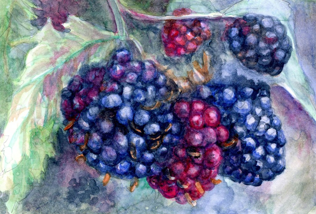 Blackberries, Anna Mason style. Blackberries-Jenn's Schmincke Watercolor on Hahnmemühle Harmon