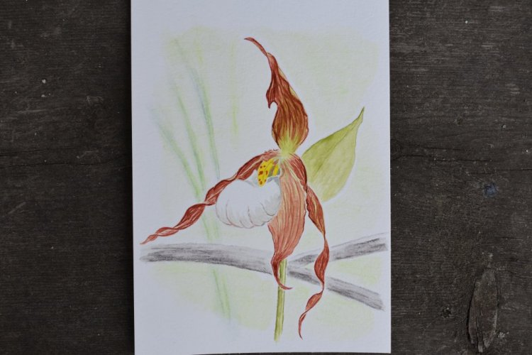 June 22, 2018 another orchid. Painted this one on 5×7 paper so that I could fit in more detail.