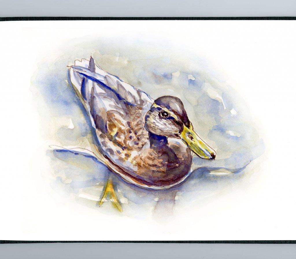 Day 26 - A Little Duck In A Big Lake - #doodlewashJune2018 Doodlewash