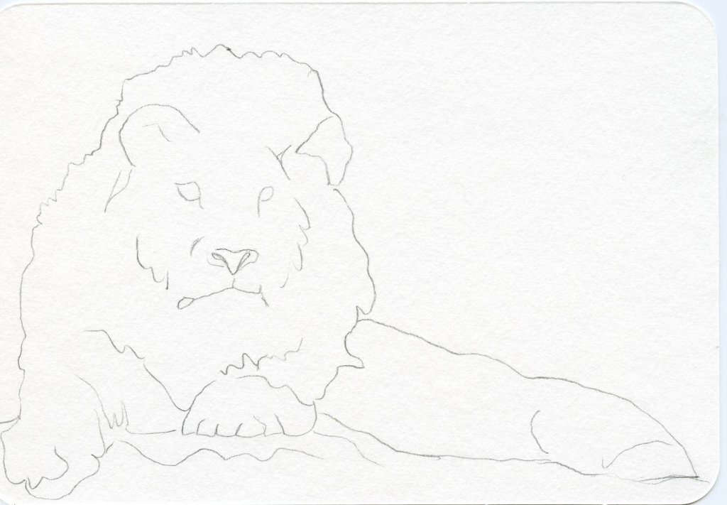 How to Draw A Lion - Contour Drawing