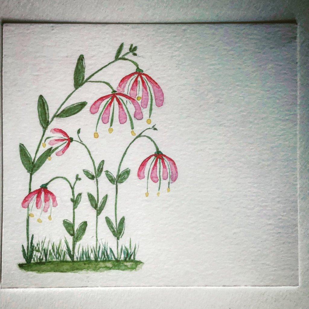 Unknown Flower IMG_0671