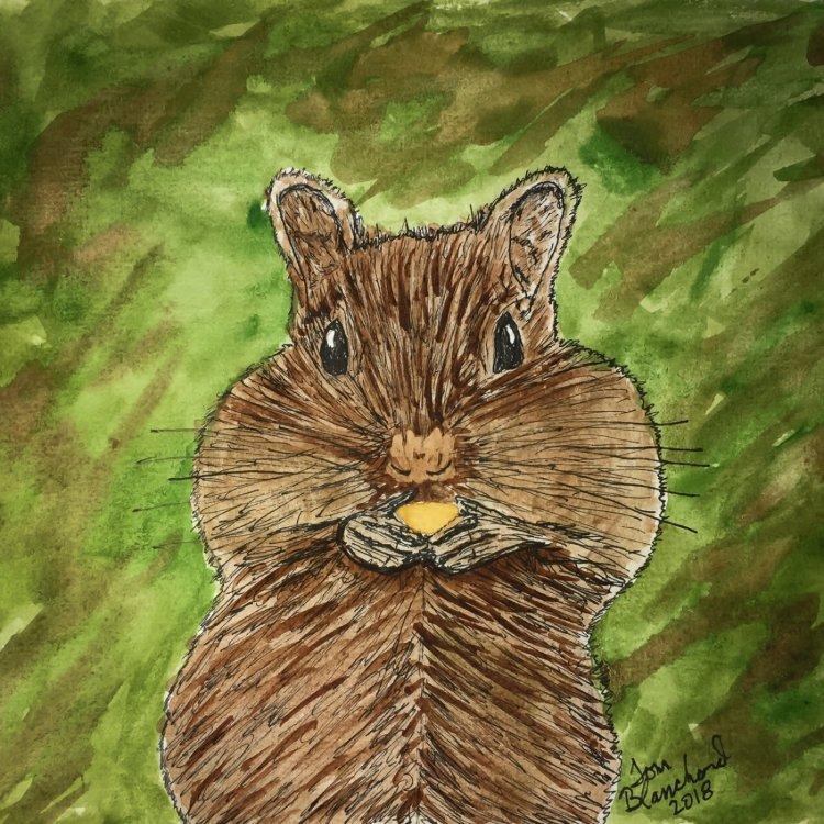 Day 12 of World Watercolor Month … Prompt – Forest Animals. I decided on this chipmunk stuff