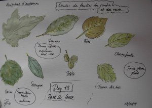 Day 13 Fast & loose. Studying leaves from my garden and some different greens – to be cont