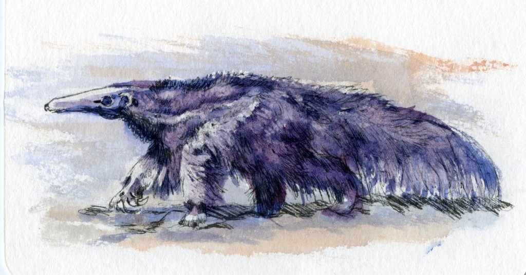 Postcards for the Lunch Bag – Did you know that the Giant Anteaters have no teeth, but their t