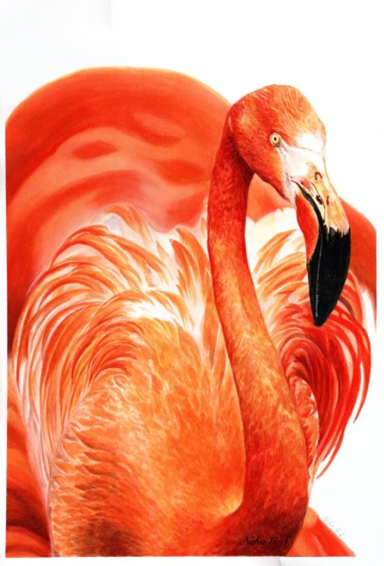 Flamingo Watercolor Painting by Neha Subramaniam - Doodlewash