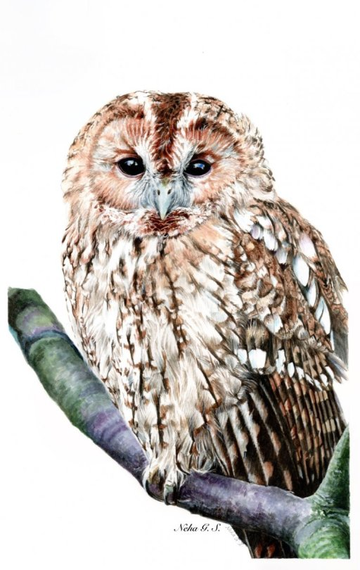 Owl Watercolor Painting by Neha Subramaniam - Doodlewash