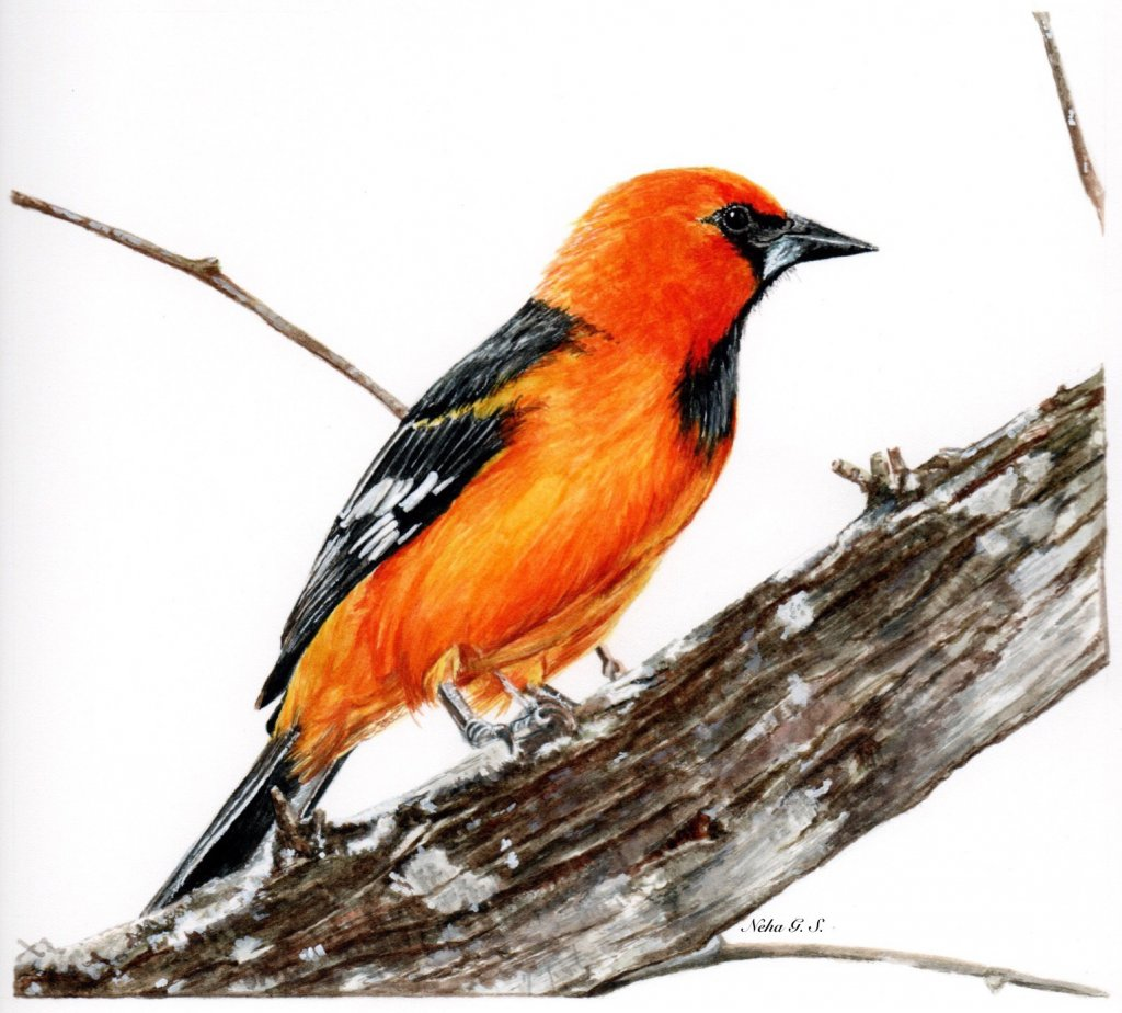Bird Watercolor Painting by Neha Subramaniam - Doodlewash