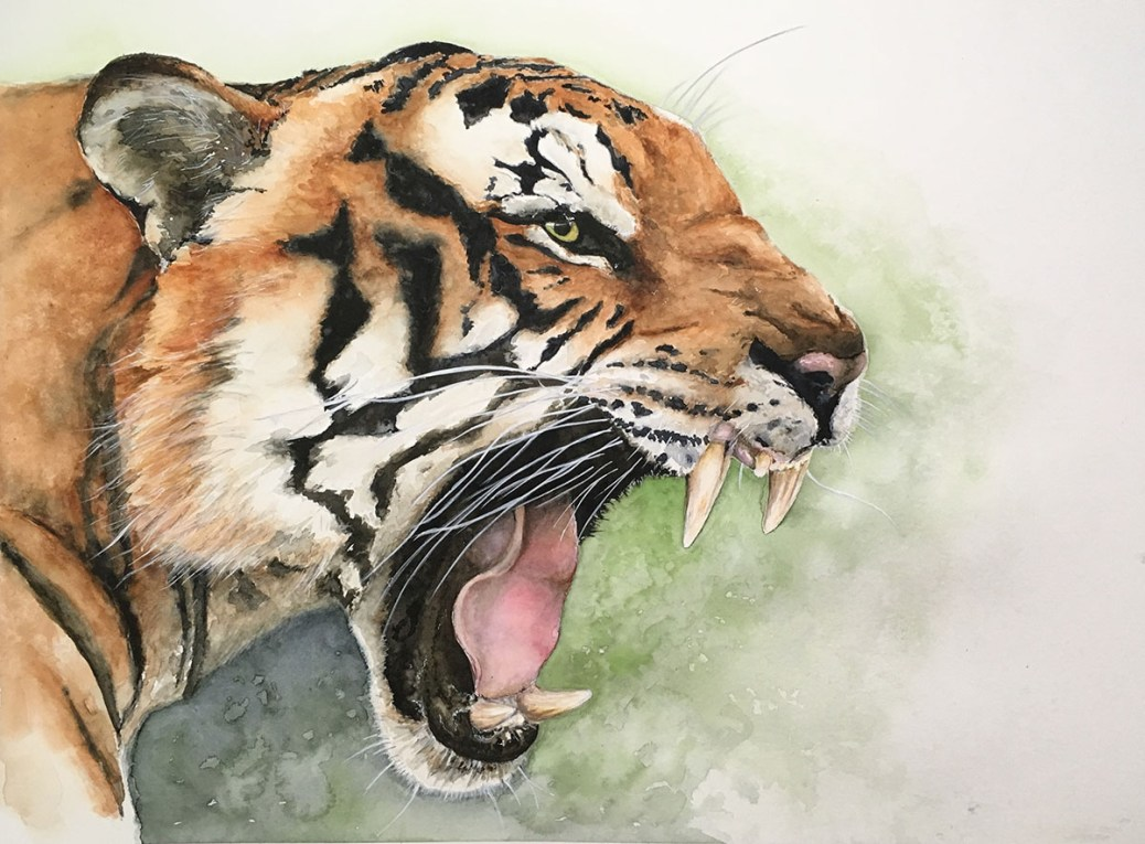 Tiger Roaring Watercolor Painting by Kate Plum - Doodlewash