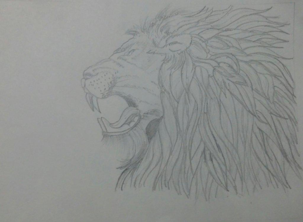#doodleawshSeptember2018#WildLife#Lion#fierce#brave#aggressive#strong#king 20180905_005435-1