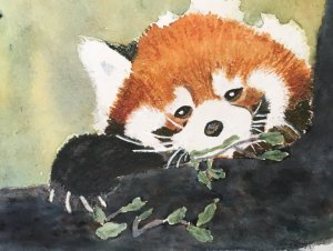 Red Panda Day… a day late… Sept. 15/2018 next time I'd make the tree lighter photo cou