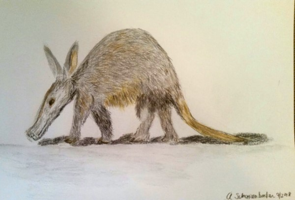 Working on my a children's book on baby animals. This is my baby anteater. Anteater (600 x 408