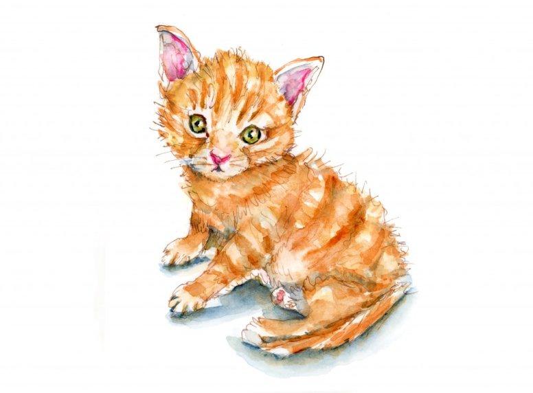 Day 1 - Ginger Cat Appreciation Day - Doodlewash