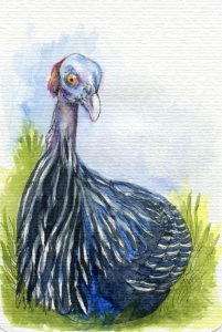 Postcards for the Lunch Bag – Did you know that the guinea hen can lay over 100 eggs a year an
