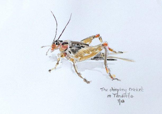 Grasshopper Watercolor by Bernadette Tully Dolan - Doodlewash