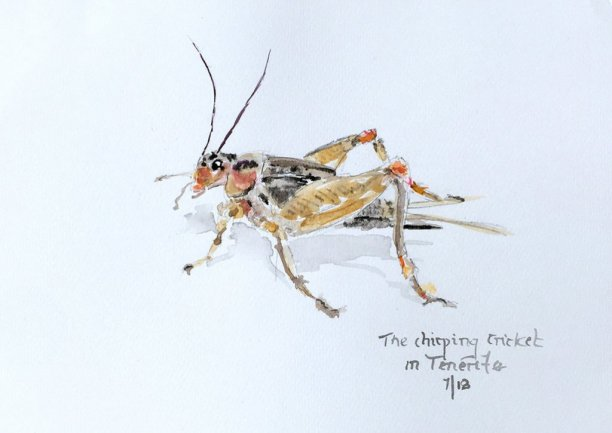 Grasshopper Watercolor by Bernadette Tully Dolan - Doodlewash